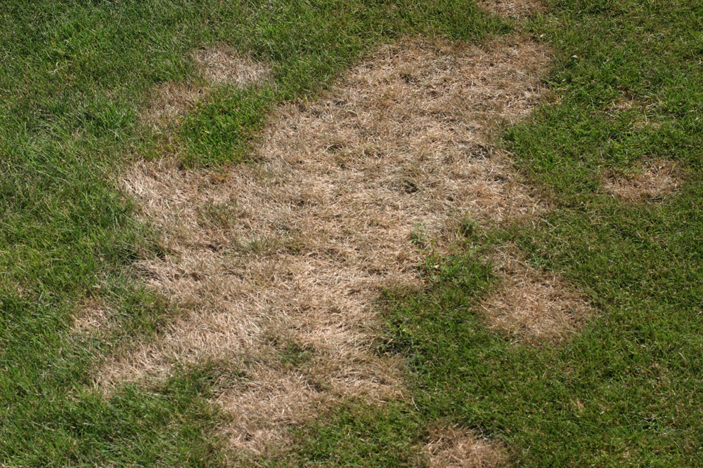 Very Turf: Pythium Diseases of Turf | UMass Center for Agriculture  BC53