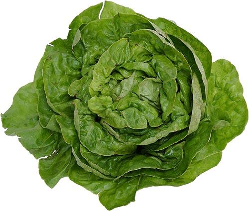 Lettuce, Endive, and Escarole | Center for Agriculture ...