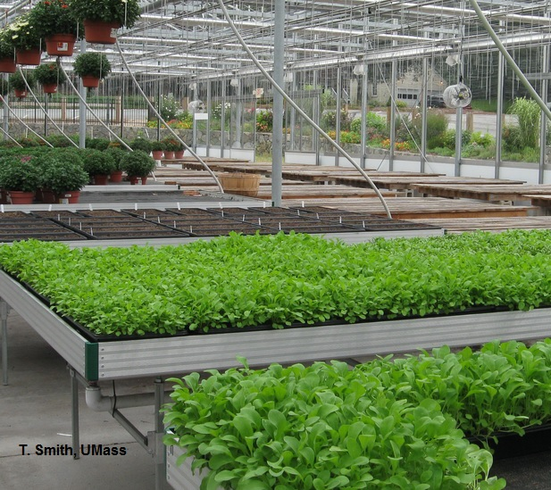 Greenhouse Amp Floriculture Greenhouse Greens Resources