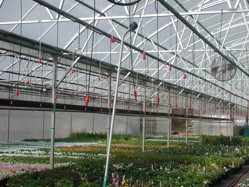 Greenhouse & Floriculture: Cleaning and Disinfecting the