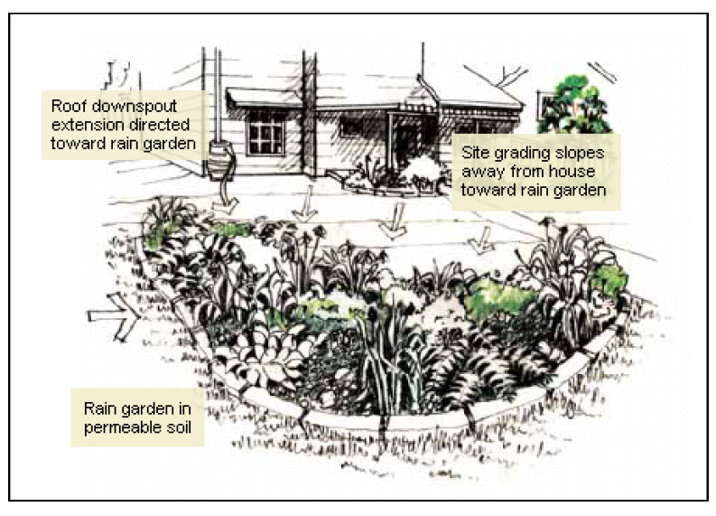 Diagram of a rain garden layout