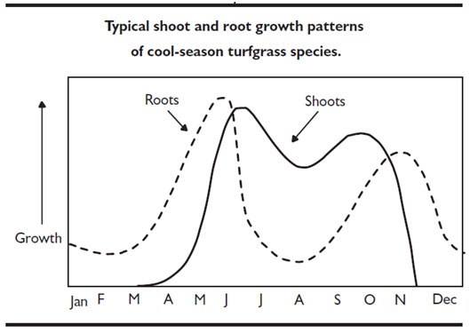Growth patterns of cool-season turfgrass species