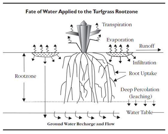 Fate of water applied to the turfgrass rootzone
