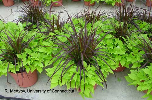 Plant Growth Regulators - Combination Planters