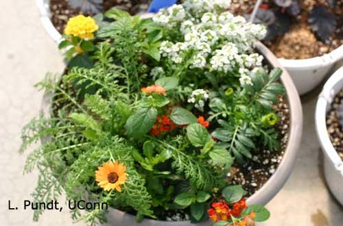 Habitat Planter