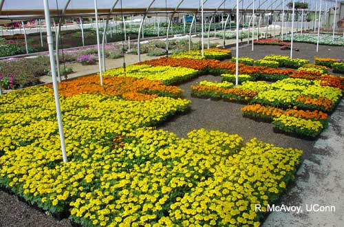 Plant Growth Regulators - Bedding Plants