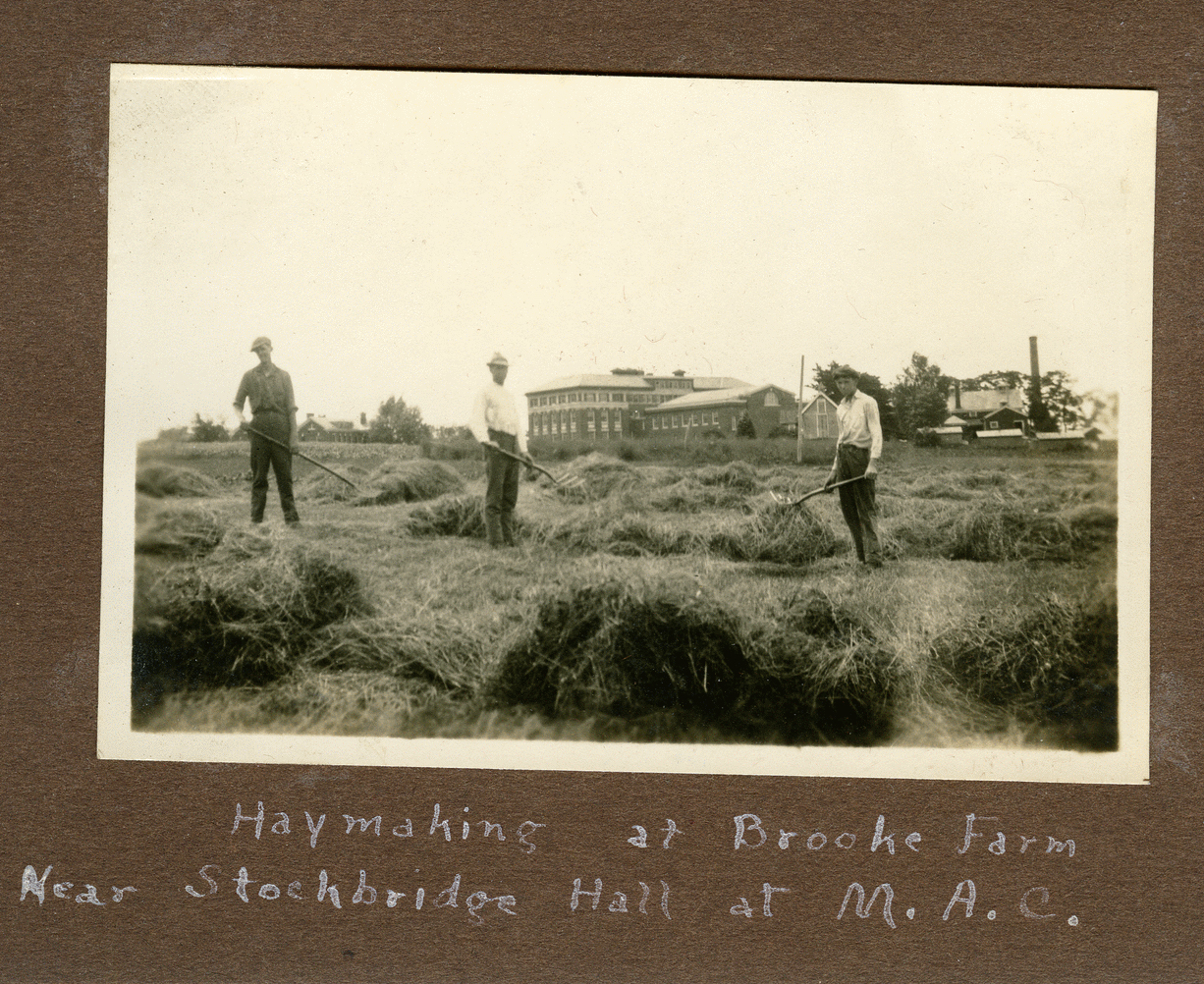Haymaking on campus in 1922 or 1923.