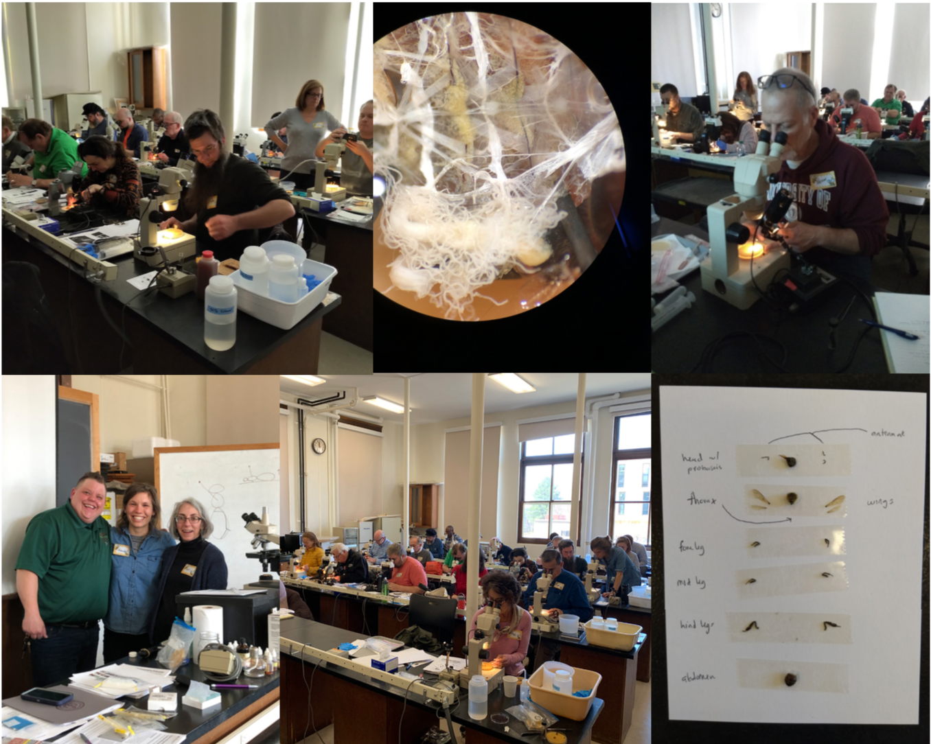 Photos from microscope workshop