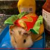 Animal Costume Class