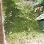 Algae growth in a greenhouse