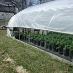 Greenhouse with roll up sides