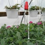 Drip Irrigation (photo: Tina Smith, UMass Extension)