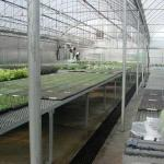 Heated Bench System for Propagation in Gutter-connected Greenhouse