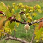 apricot051021
