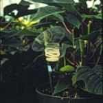 Fig 8. Custom-made Eretmocerus sp. (AZ) release cups