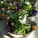 Mixed container for early spring