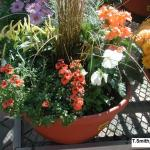 Mixed planter for fall