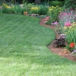 Flowering annual and perennial plants in June in MA