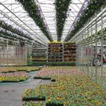 Shipping early spring greenhouse crops