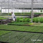 Banker plants and other biological control being used at D&D Farms