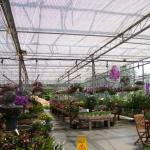 Truss to truss energy and shade screen in greenhouse