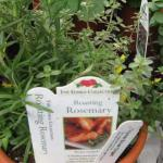 Herb Planter in greenhouse