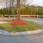"Example of over-application of mulch or ""volcano"" around the base of trees."