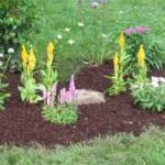 Newly planted flower garden