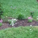 New garden that has been watered prior to being mulched.