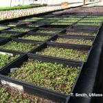 Open seedling flats