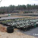 Preparing ornamental plants for overwintering