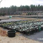 Cleaning plants prior to overwintering