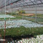 Overwintering perennials in a greenhouse