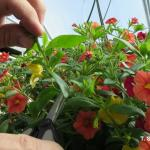 Shaping a hanging basket during production