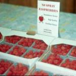 Hamilton's 'Tulameen' raspberries ready for sale in April
