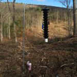 Funnel trap used to monitor for southern pine beetle in Montague, MA. Image courtesy of Marc DiGirolomo, US Forest Service.