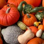 Pumpkin, Squash Medley