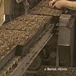 Transplanting conveyor in greenhouse