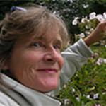 Anne Averill