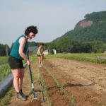 Hannah Helfner and Kristie Herman, undergraduate students, hoe weeds at the Student Enterprise Farm