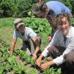 Three women scouting for pests