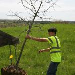 Andy Cox sets tree at site for planting