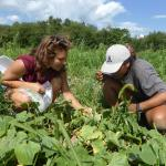 Alicia Zolondick trains a young farmer to scout for pests