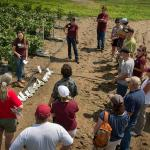 An active Agricultural Field Day in South Deerfield