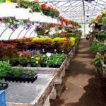 Ravenwold Greenhouses