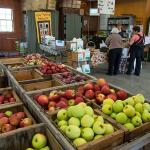 Apples at Cold Spring Orchard Research and Education Center in Belchertown