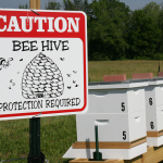 Langstroth hives at UMass Amherst Apiary