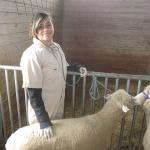 4-H and sheep
