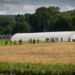Hoophouse tour of crops