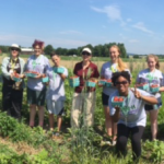 4-H students pick strawberries in Hadley to process into jam-Kerry Bickford photo